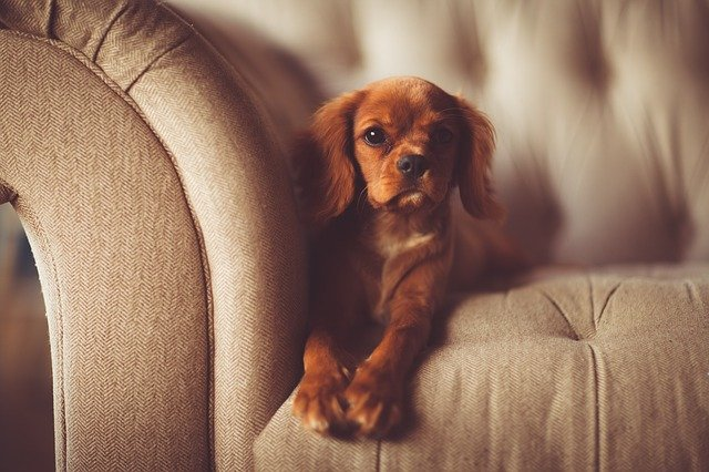 How to get dog smell out of couches